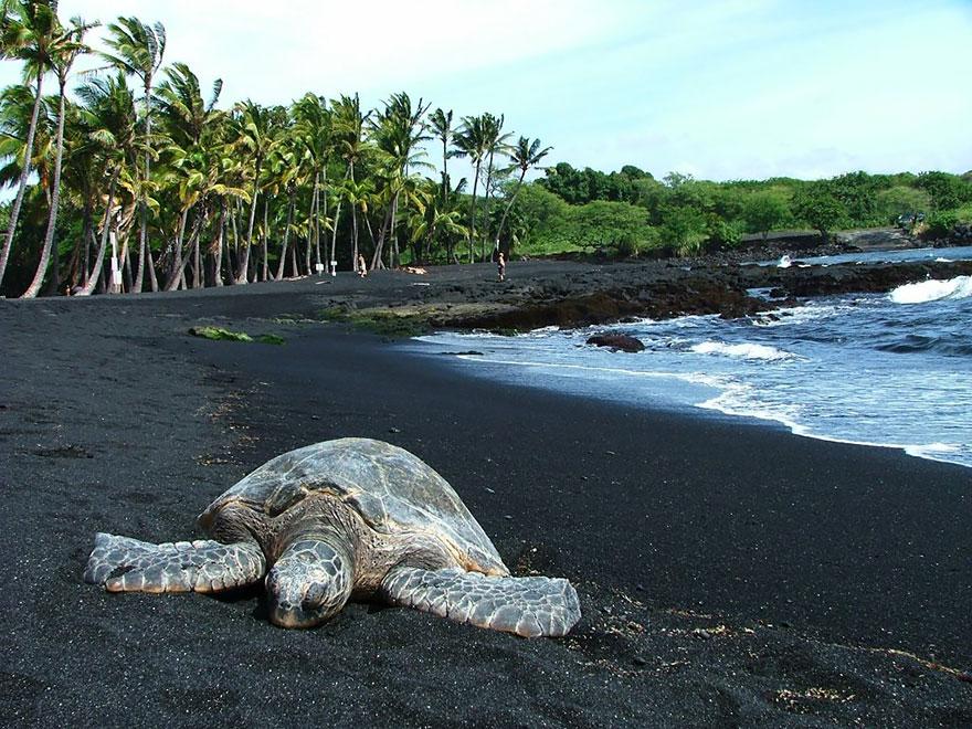 شاطئ بونالو ذو الرمال السوداء، هاواي